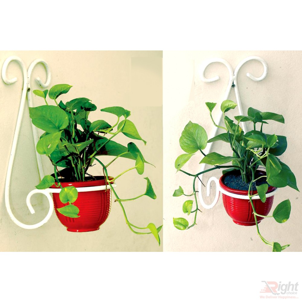 Wall Hanger With Indoor Plants