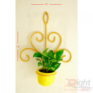 Yellow Color Iron Wall Hanger With Money Plant