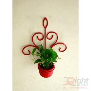 Red Color Iron Wall Hanger With Money Plant