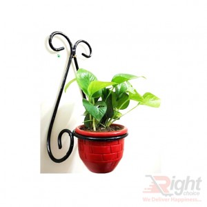Wall Hanger With Indoor Plants (Red Tob)