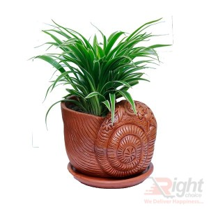 Beautiful and Nice Antic Color Snail Tob with Indoor Plant