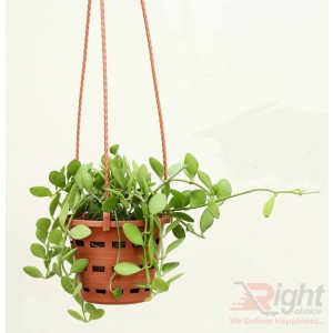 Green Leaves Plant 2pcs combo set